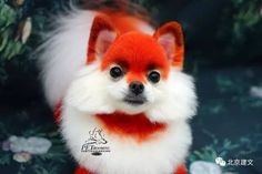 What a cute fox!opawz.com supply creative grooming products for worldwide groomer.