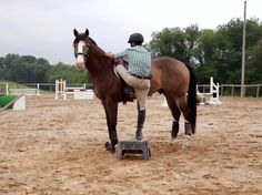 Evention: How to correct three common annoying young horse habits « HORSE NATION