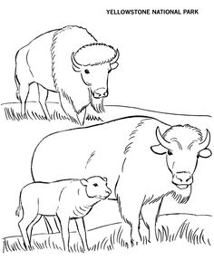 To use with zoo field trip and music lesson -American Bison are now at the National Zoo...smjYellowstone National Park Coloring Page