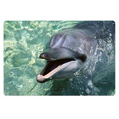 New 3D Animal Dolphin Printing Doormat Antislip Floor Carpet For Living Room Fashion House Front Door Mat Free Shipping