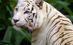 37-somptueux-animaux-albinos-que-la-nature-a-oublie-de-colorer13