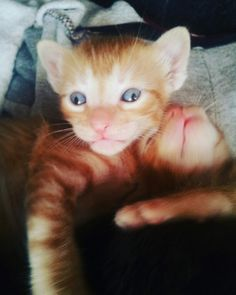 #cats #gato #bebè #hermoso