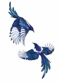 Blue birds - maybe for a Tattoo stencil - Animal Pet artwork bird birds tattoostencil Illustration art sketchbook