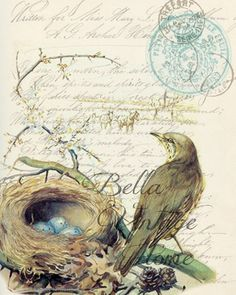 Botanical Bird with Nest Print