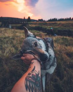 ek pets his Czechoslovakian wolfdog named Sitka in the Czech Republic. See SWNS copy S Animals And Pets, Baby Animals, Funny Animals, Cute Animals, Nature Animals, Cute Puppies, Cute Dogs, Dogs And Puppies, Puppies Puppies