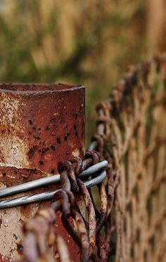 Surprising Useful Ideas: Metal Fence Arbors tall farm fence.Green Fence Design modern fence how to build. Brick Fence, Pallet Fence, Front Yard Fence, Metal Fence, Rusty Metal, Dog Fence, Glass Fence, Concrete Fence, Fence Art