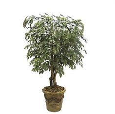 Green up your commercial spaces and simultaneously minimize the green coming out of your long-term design budget with the use of indoor artificial trees. #artificialtree