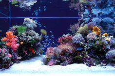 14 Best Marine Aquascape Images In 2014 Aquarium Marine Aquarium