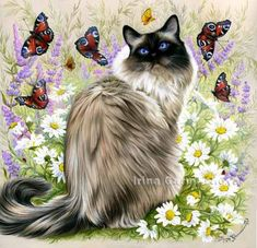 Colored Pencil, Ragdoll Cat - Time Of Butterflies Irina Garmashova