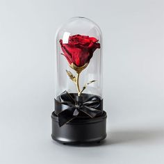 Order a Live Preserved Rose in a beautiful wind-up glass case for your special someone. Shop for romantic anniversary and birthday gifts at the Apollo Box. Romantic Gifts For Her, Romantic Surprise, Romantic Anniversary, Apollo Box, Forever Rose, Romantic Gestures, Christmas Gifts For Women, How To Preserve Flowers, Led Night Light