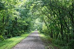 The Wilderness Road itself at Wilderness Road State Park in SW Virginia