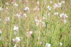 small flowers fleurs blanches et roses by pixizone.deviantart.com on @deviantART