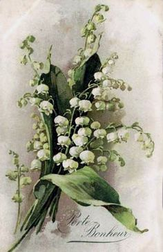 Lily of the Valley Flower Catherine Klein Half Yard Long, via Etsy. Art Vintage, Vintage Cards, Vintage Postcards, Catherine Klein, Botanical Illustration, Botanical Prints, Vintage Pictures, Vintage Images, Vintage Flowers
