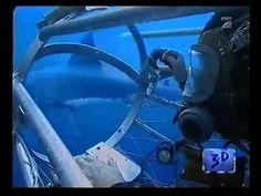 Megalodon - Riesenhaie aus der Urzeit