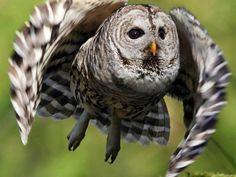 Twitter, Beautiful shot of flying Owl pic.twitter.com/0mQpqubrQa
