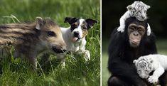 Queste 30 adorabili foto di animali ci dimostrano che l'amicizia va ben oltre la specie