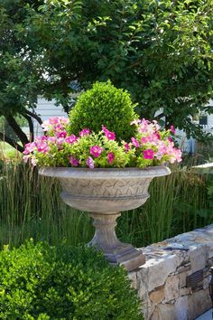 Beautiful boxwood and Petunia planter - trick for keeping your container watered....