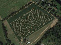 Maze Runner corn maze at Horse Sleigh Farms in NJ!