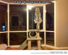 What happens when cat owners get a dog…