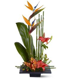 Order Paradise Found TF flower arrangement from Cedar Hill Flower Girls, your local Birdsboro, PA florist. Send Paradise Found TF floral arrangement throughout Birdsboro, PA and surrounding areas. Tropical Flowers, Tropical Flower Arrangements, Modern Floral Arrangements, Asian Flowers, Flower Arrangement Designs, Ikebana Flower Arrangement, Home Flowers, Exotic Flowers, Beautiful Flowers