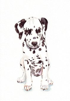 Dalmatian Puppy Painting dog art print of by Splodgepodge