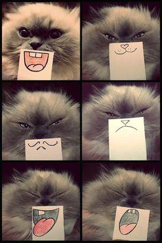 Cat emotions.