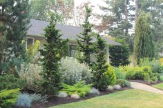 These are three of the most useful front yard landscaping ideas that have been used by homeowners in the past. The charm of these front yard landscaping ideas. Garden Shrubs, Shade Garden, Lawn And Garden, Garden Paths, House Landscape, Landscape Design, Garden Design, Privacy Landscaping, Front Yard Landscaping