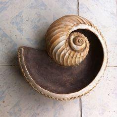 Shell plate Angelin Kulish