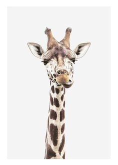 Baby Giraffe Poster no grupo Posters / Animais em Desenio AB Photo Pop Art, Desenio Posters, Baby Animals, Cute Animals, Wild Animals, Wall Art Prints, Poster Prints, Giraffe Pictures, Wal Art