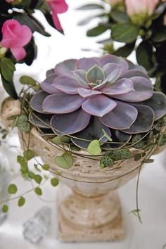 The beauty of one succulent in a simple garden urn. Pretty, pretty!