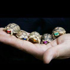 turtles.. ninja turtles!