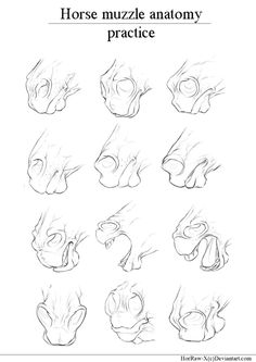 Horse muzzle |anatomy study| by HorRaw-X.deviantart.com on @DeviantArt
