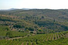 The Chianti Hills