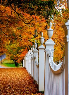VERMONT: Woodstock, Vermont. Autumn fence.
