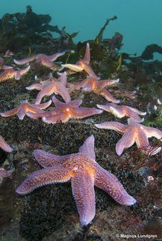 Starfish with lights. Underwater Life, Underwater Creatures, Ocean Creatures, Orcas, Life Under The Sea, Life Aquatic, Sea Dragon, Water Animals, Deep Blue Sea