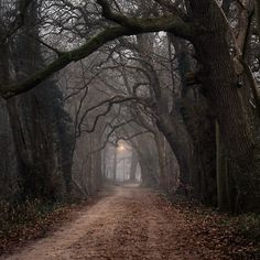 Trees guide the path that ever runs. Don't you want to see where it goes? I do.