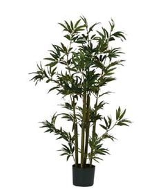 Shop for Bamboo Silk Plant (48 in. Tall). Get free shipping at Overstock.com - Your Online Home Decor Outlet Store! Get 5% in rewards with Club O! - 1020495