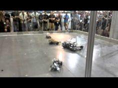 Glass Car Destruction Derby - CHAMPS Las Vegas 2012