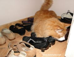 Murchyk the cat and shoes kingdom  #cat #Murchyk #shoes