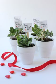 DIY: Valentine's Day Succulent Party Favors (with printable)