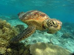 Sea Turtle Wallpaper, Kawaii Turtle, Pet Recycling, Sea Turtle Pictures, Marine Environment, Turtle Love, Great Barrier Reef, Ocean Life, Beach Art