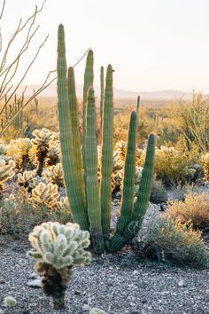 A Guide to Organ Pipe Cactus National Monument / Fresh off the Grid