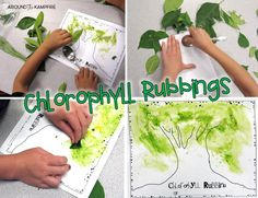 Chlorophyll rubbings-Integrating art into a plant life cycle unit.