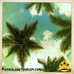 Palms in Mafia Island by mafiaislandtourism.com