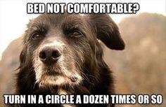 13 Hilarious #Memes Of Dog Logic http://ibeebz.com
