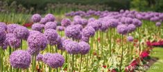 Gardens Offering Free Entry to Fathers on Father's Day 2018 - Pumpkin Beth Stuff To Do, Things To Do, How To Memorize Things, Sussex Gardens, Beneficial Insects, Free Entry, Mauve Color, Saving Ideas, Shades Of Purple