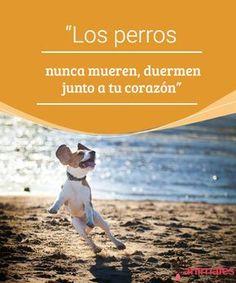 """""""Los perros nunca mueren, duermen junto a tu corazón"""" Los perros nunca mueren, duermen junto a tu corazón"""", es la perfecta síntesis del sentimiento hecho palabra ante la pérdida de una mascota. #muerte #corazón #sentimiento #consejos"""