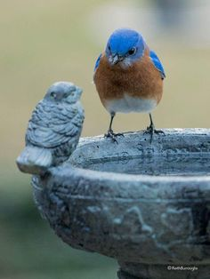 Beautiful blue bird on bird bath looking at sculpture of bird on the side like it is a real bird and friend. So cute!
