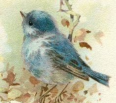 ~ The Feathered Nest ~ bluebird