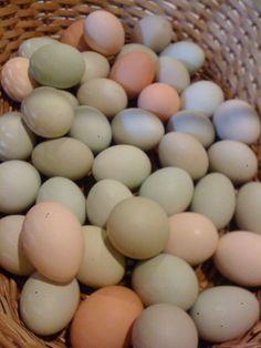Yenni Ranch Basket of Eggs